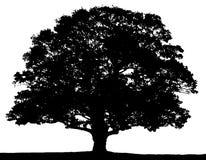 Silhouette noire et blanche d'arbre d'été illustration stock