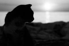 Silhouette noire et blanche de chat dans le coucher du soleil Image stock