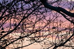 Silhouette of nude tree branches in colorful pink violet sunset sky. France Stock Images