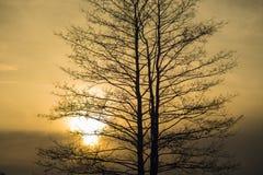 Silhouette nue d'arbre au crépuscule Photos libres de droits