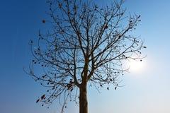 Silhouette nue d'arbre avec le fond de ciel bleu Photos stock