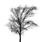 Silhouette nue noire de photo d'arbre d'isolement sur le blanc Image stock