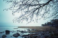 Silhouette nue sans feuilles d'arbre Photographie stock libre de droits