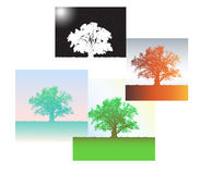 Silhouette of an oak and four seasons. Stock Photography
