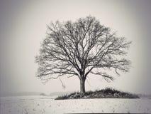 Silhouette of oak tree Royalty Free Stock Photos