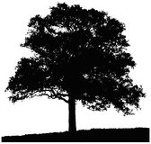 Silhouette of oak tree. Isolated on white background Royalty Free Stock Photography