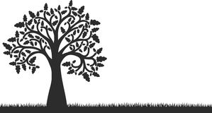 Silhouette of oak tree with leaves and grass Royalty Free Stock Photography