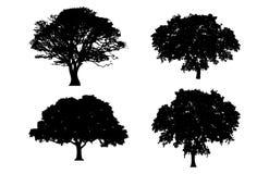 Oak Tree Silhouette Cliparts Stock Vector Illustration Of White