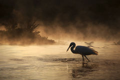 Silhouette Of A Swan Royalty Free Stock Photos