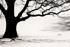 Free Silhouette Of An Old Tree Stock Photos - 2899123