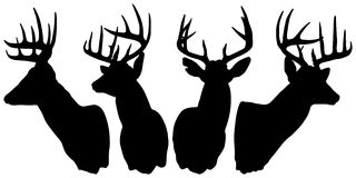 Silhouette Of Bucks Royalty Free Stock Photography
