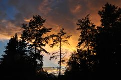 Free Silhouette Of Pine Trees Against Sunset And Golden Clouds. Forest Landscape Stock Images - 139072474