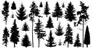 Free Silhouette Of Pine Trees. Set Of Forest Trees Isolated On White Background. Collection Coniferous Evergreen Forest Trees. Stock Photography - 138912002