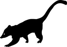 Silhouette Of South American Coati Stock Images