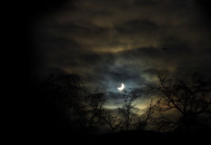Silhouette Of Trees Against The Crescent At Night Stock Photos