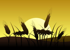 Silhouette Of Wheat And Flowers Against The Sun. Royalty Free Stock Images
