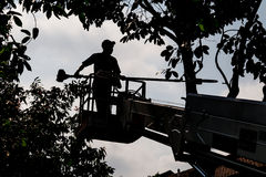 Free Silhouette Of Worker On Crane Cutting Tree Branches With A Chain Saw Royalty Free Stock Photo - 51288045