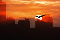 Silhouette of old  building. Silhouette of high old building and the eagle on sky sunset background ,white and black Royalty Free Stock Photography