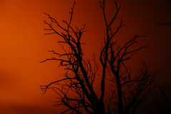 Silhouette old dry dead tree at night Stock Images