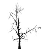 Silhouette old dry tree Stock Image