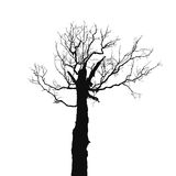 Silhouette old dry tree Stock Images