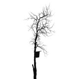Silhouette old dry tree with starling house Royalty Free Stock Photos