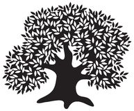 Silhouette of the old olive tree. Vector illustration Stock Image