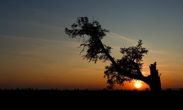 Silhouette of a old tree Stock Photography