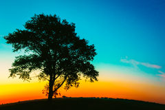 Silhouette Of Old Tree In Sunset Colors Royalty Free Stock Photos