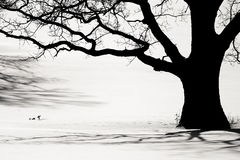 Silhouette of an old tree in the winter Royalty Free Stock Photography