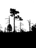 Silhouette old wood Stock Photo