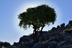 Silhouette of oleve tree in rock. Royalty Free Stock Images