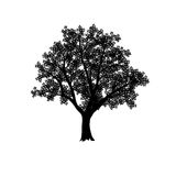 Silhouette of the olive tree with leaves Stock Photography