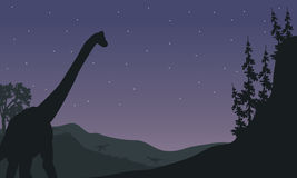 Silhouette of one Brachiosaurus at night Stock Photography
