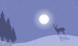 Silhouette of one reindeer at night scenery Royalty Free Stock Photography
