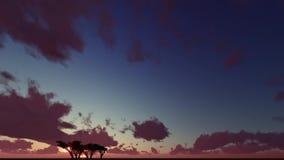 Silhouette, one tree dusk landscape. Silhouette, one tree cloudy dusk landscape stock footage