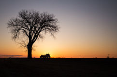 Silhouette of one tree and semi truck at sunset Stock Photography