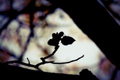 Silhouette of an orange oakleaf butterfly Royalty Free Stock Image