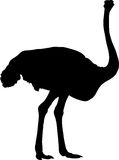 Silhouette of a ostrich, a big flightless bird. Digitally hand drawn vector silhouette, black isolated on white background Royalty Free Stock Image