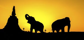 Silhouette of pagoda and elephants Stock Images