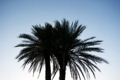 Silhouette of palm Stock Images