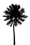 Silhouette of palm Royalty Free Stock Photo