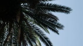 Silhouette of palm branches against the sky. In hot weather stock video