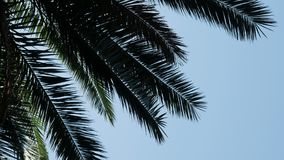 Silhouette of palm branches against the sky. In hot weather stock footage