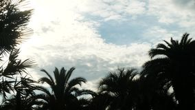 Silhouette of palm branches against the sky in hot weather, copy space. 4k stock video