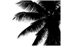 Silhouette of palm branches Stock Photos