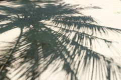 Silhouette of palm branches on a sandy beach on a tropical islan. D Stock Photos