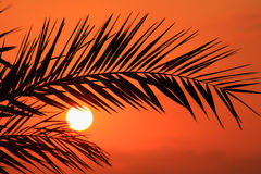Silhouette of palm fronds at sunset. Cyprus. Royalty Free Stock Photos