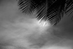Silhouette of palm leaf against sun on rainy clouds Royalty Free Stock Image