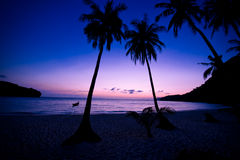 Silhouette of a palm tree Royalty Free Stock Photography